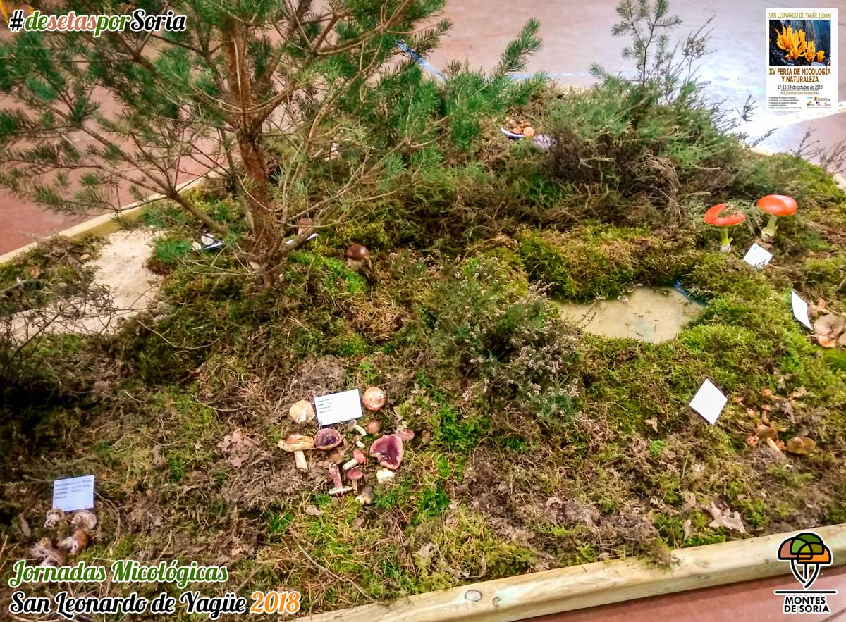 Jornadas Micológicas San Leonardo de Yagüe 2018 exposición 7