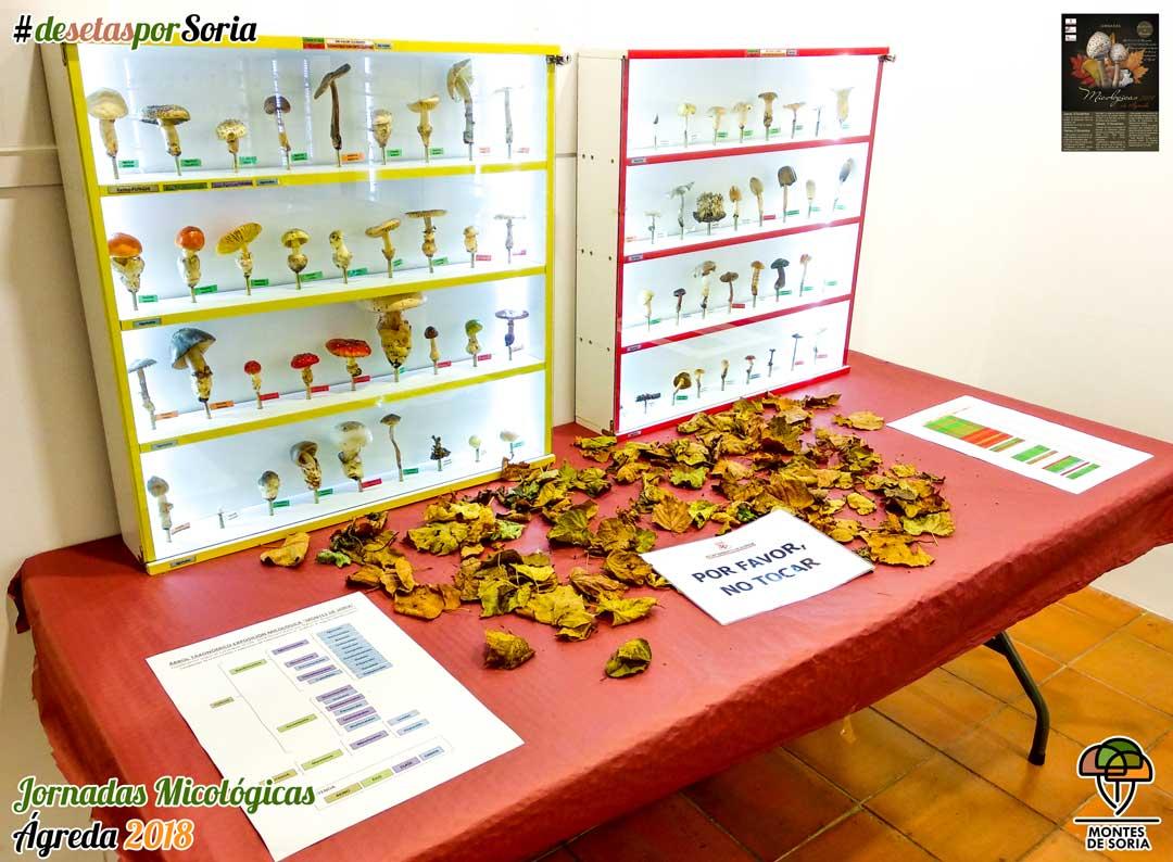 Jornadas Micológicas en Ágreda 2018 exposiciones