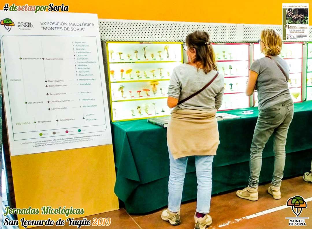 Jornadas Micológicas San Leonardo de Yagüe 2019 carteles informativos