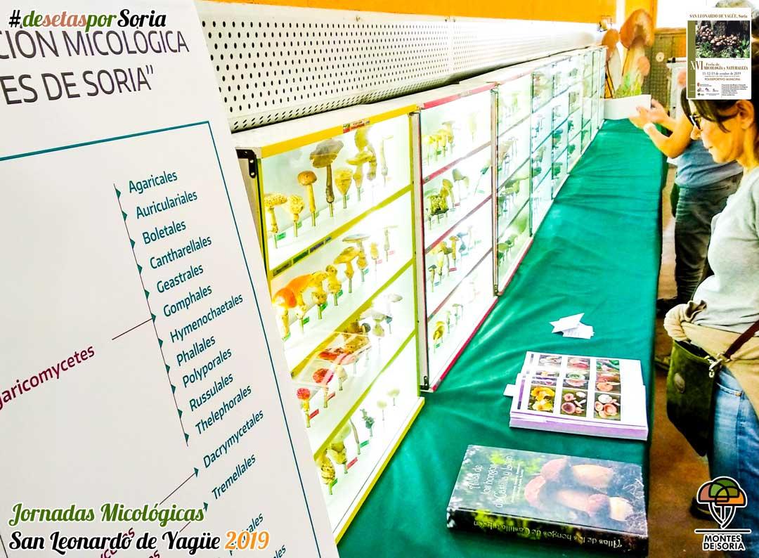 Jornadas Micológicas San Leonardo de Yagüe 2019 exposición vitrinas