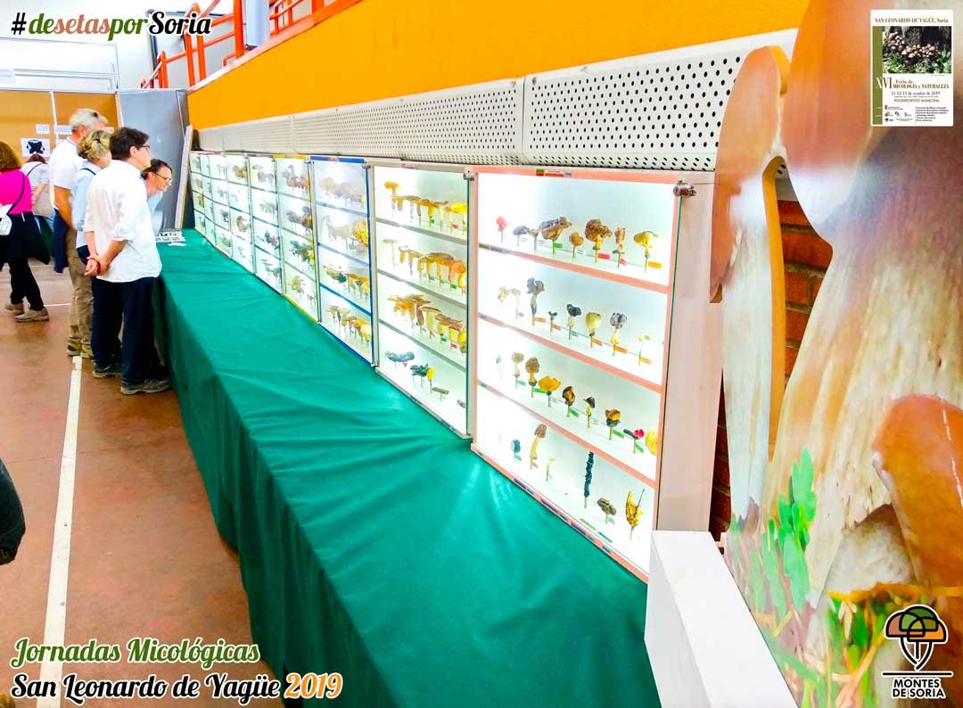 Jornadas Micológicas San Leonardo de Yagüe 2019 setas liofilizadas