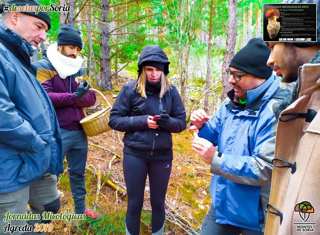 Jornadas Micológicas en Ágreda 2019 identificación de setas