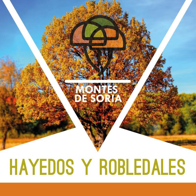 Hayedos y Robledales en Soria