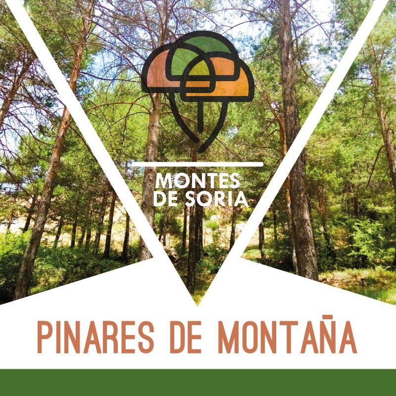 Pinares de Montaña en Soria