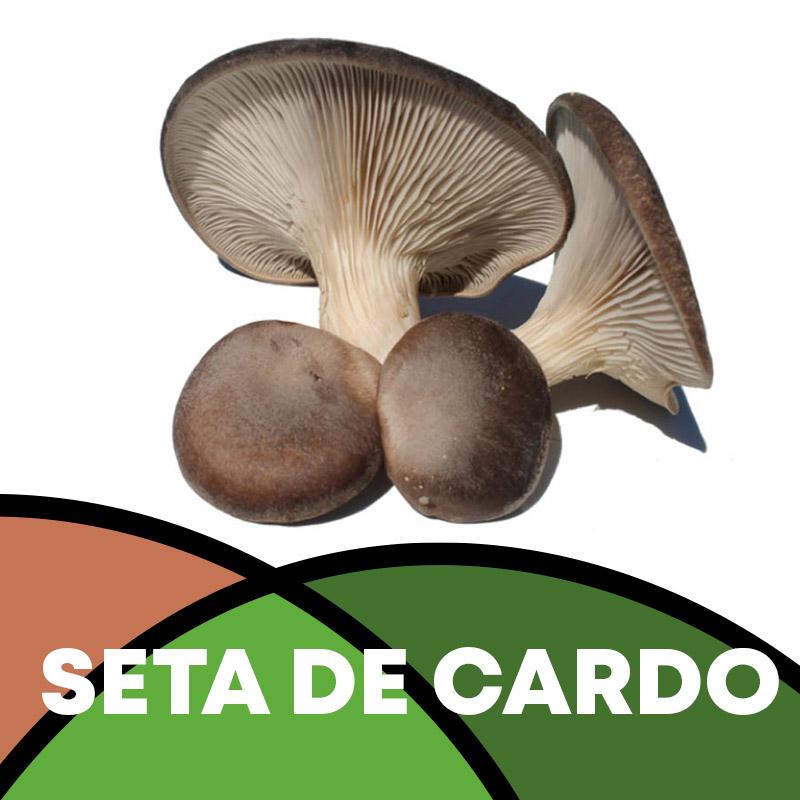 Seta de Cardo en Soria