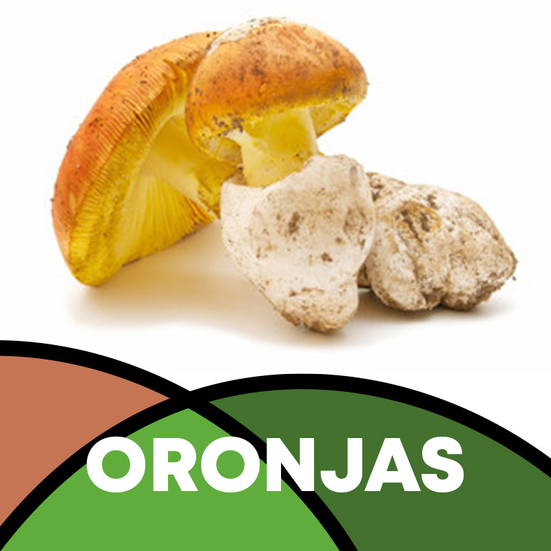 Oronja en Soria