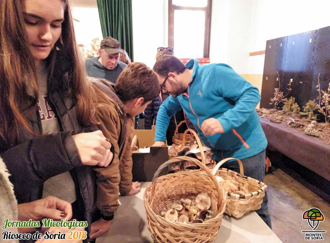 Jornadas Micológicas Rioseco de Soria 2018 clasificación