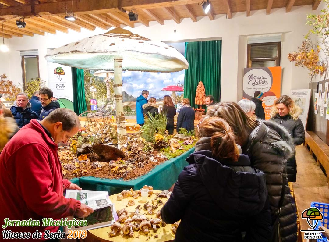 Jornadas Micológicas Rioseco de Soria 2019 5