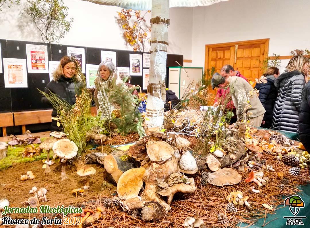 Jornadas Micológicas Rioseco de Soria 2019 7