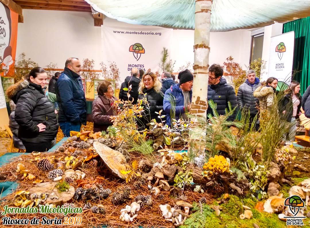 Jornadas Micológicas Rioseco de Soria 2019 11
