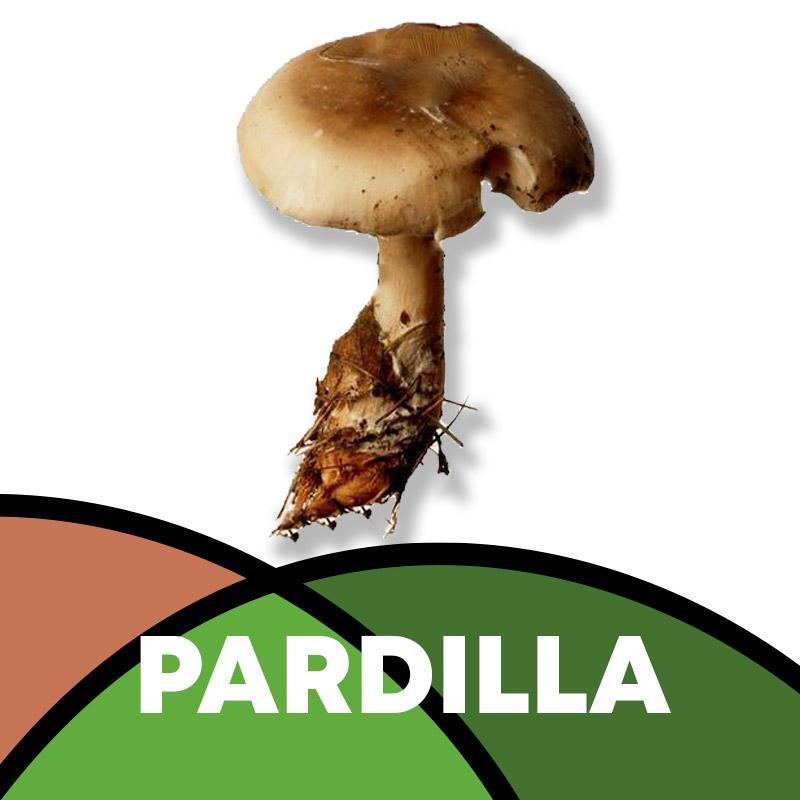 Pardilla en Soria
