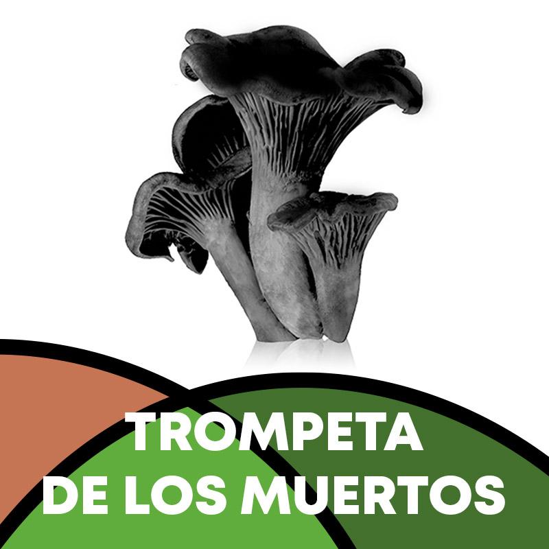 Trompeta de los muertos en Soria