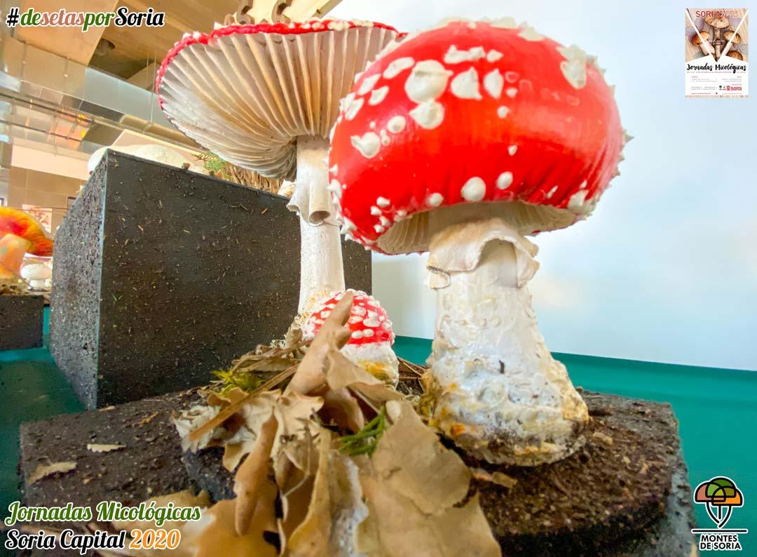 Jornadas Micológicas Soria 2020 reproducción de setas