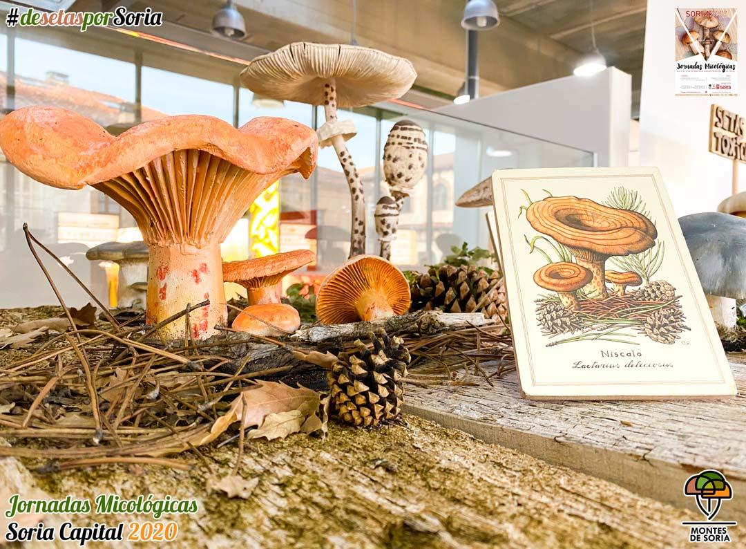 Jornadas Micológicas Soria 2020 setas