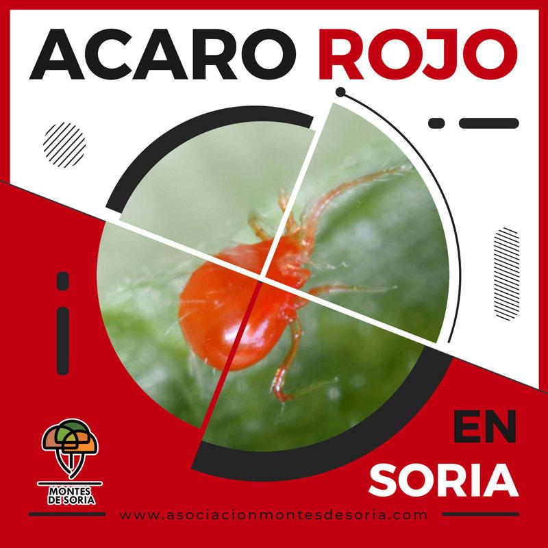 Ácaro Rojo en Soria