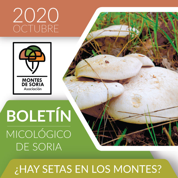 Todos los Santos Puente Micológico en Montes de Soria