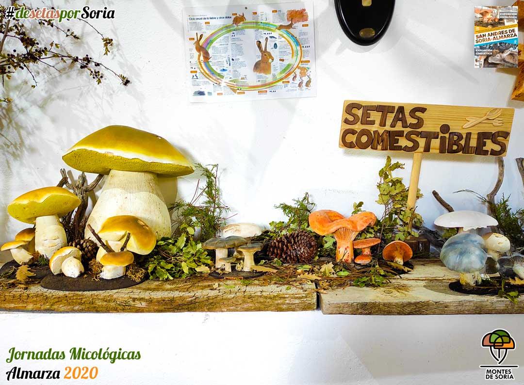 Jornadas Micológicas Almarza 2020 setas comestibles