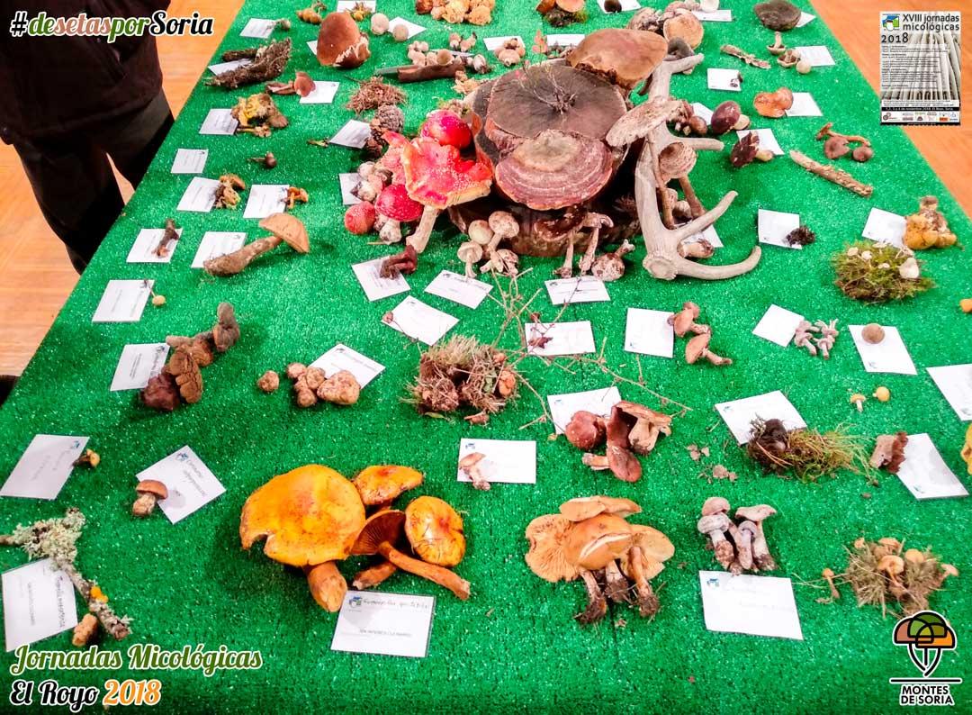 Jornadas micológicas El Royo 2018 mesa exposición