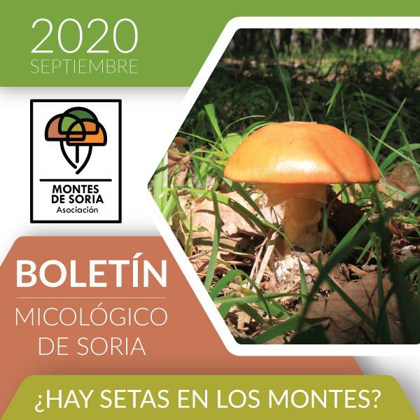 Inauguramos el Boletín Micológico de Montes de Soria