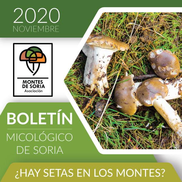 Setas en los Montes de Soria a finales de noviembre