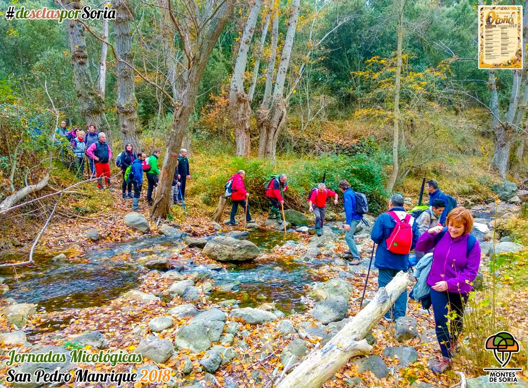 Jornadas Micológicas San Pedro Manrique 2018 senderismo