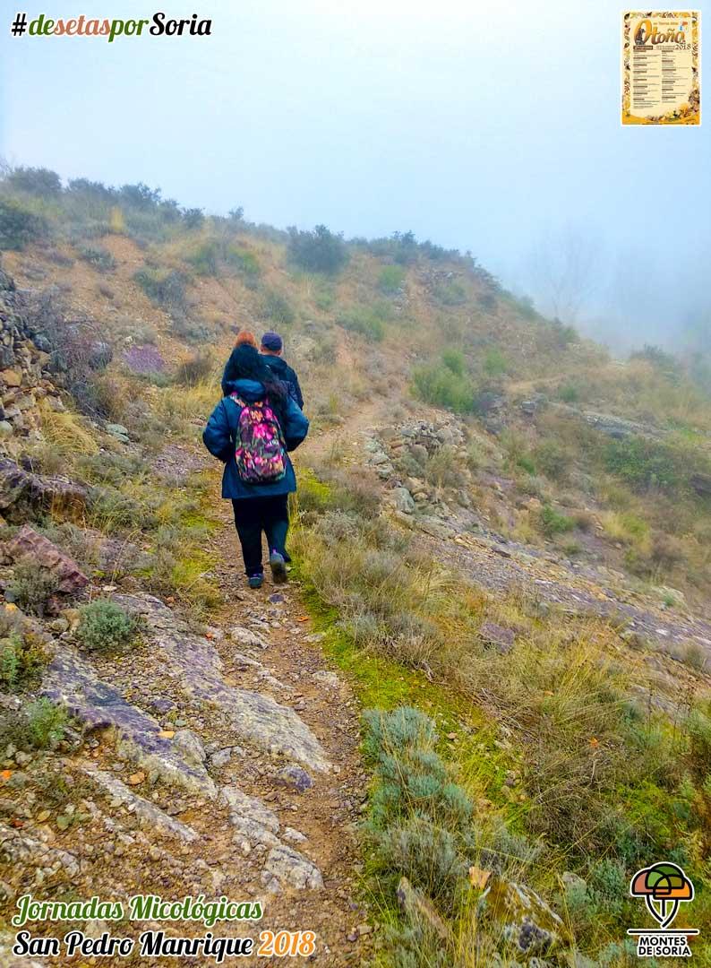 Jornadas Micológicas San Pedro Manrique 2018 treking