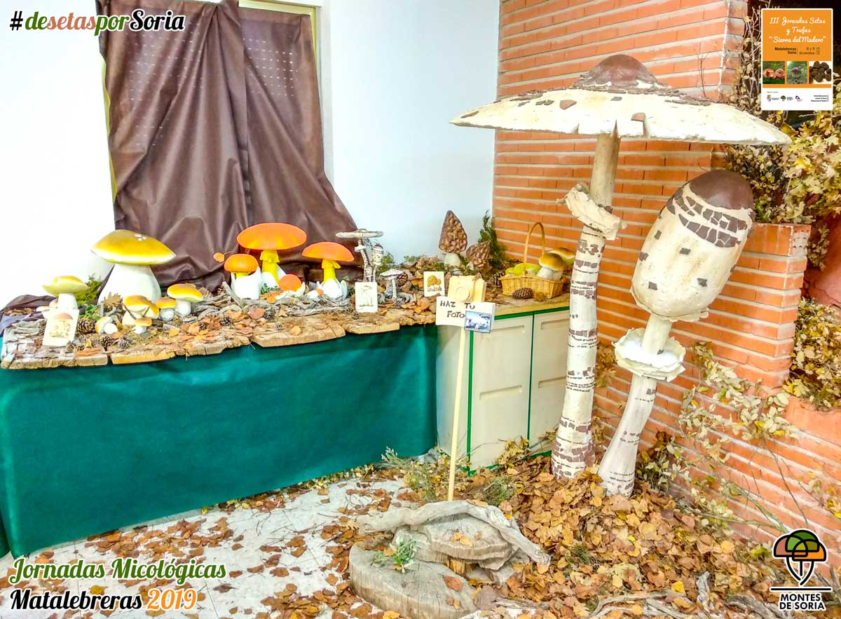 Jornadas Micológicas Matalebreras 2019 reproducciones