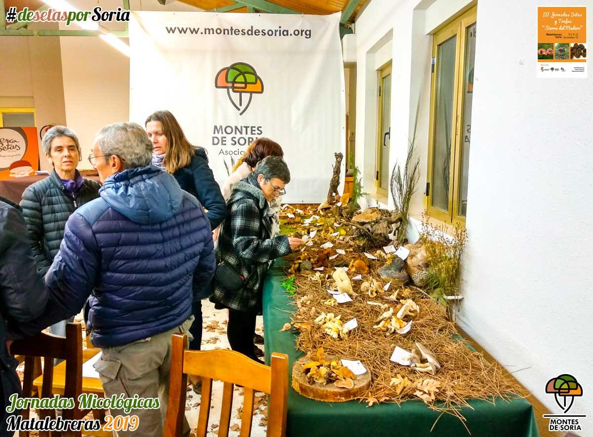 Jornadas Micológicas Matalebreras 2019 exposición público