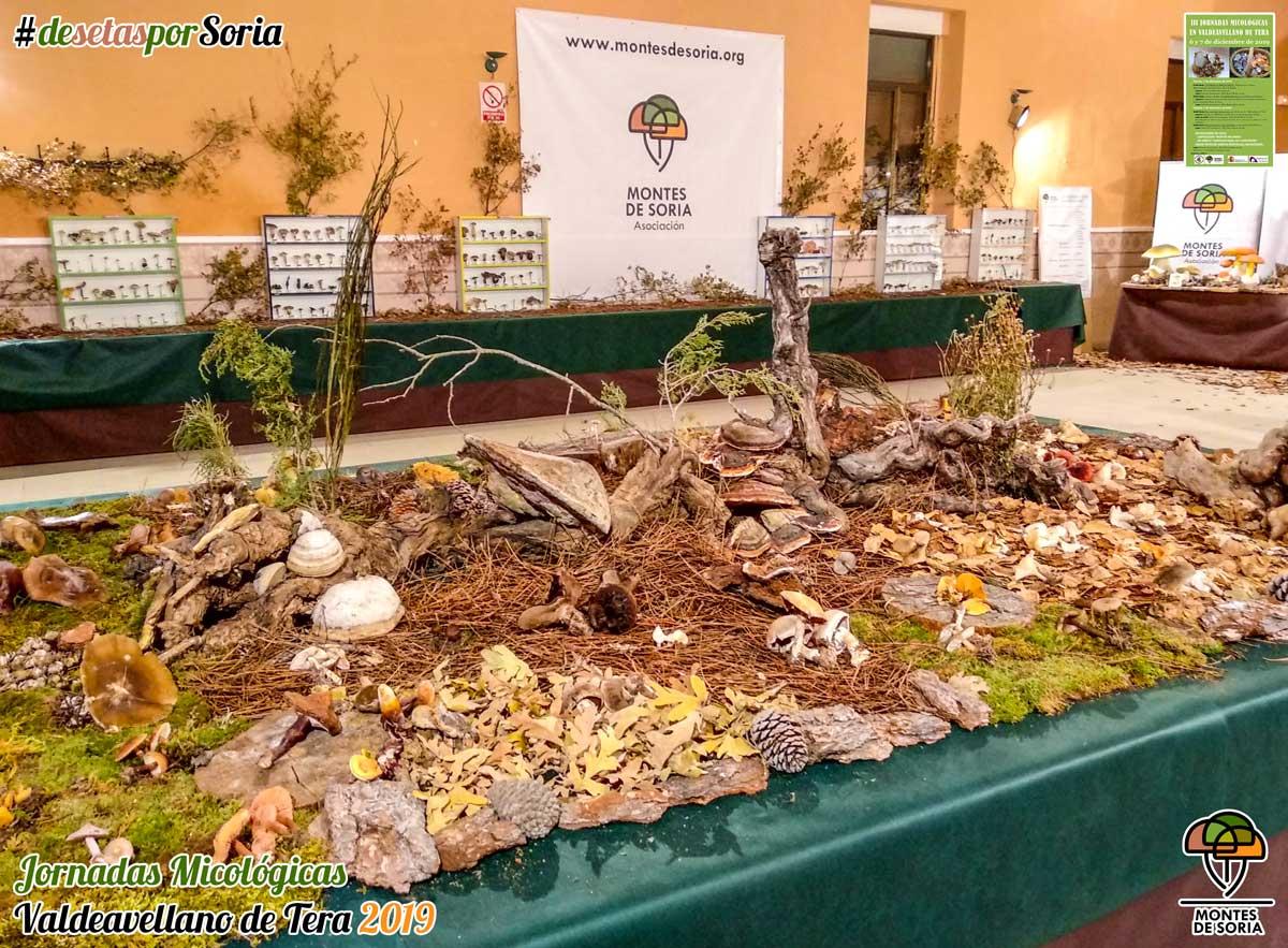 Jornadas Micológicas Valdeavellano de Tera 2019 exposición en fresco