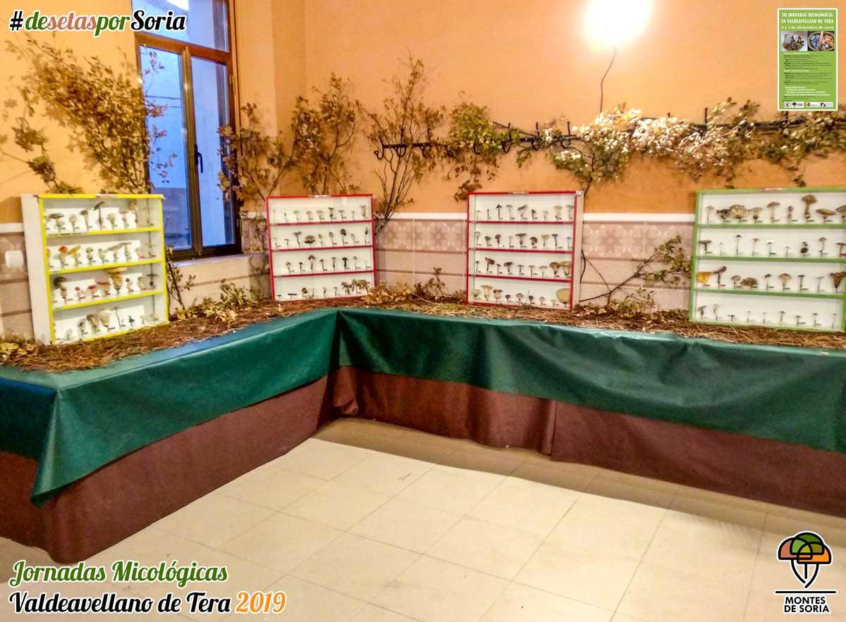 Jornadas Micológicas Valdeavellano de Tera 2019 exposición liofilizadas