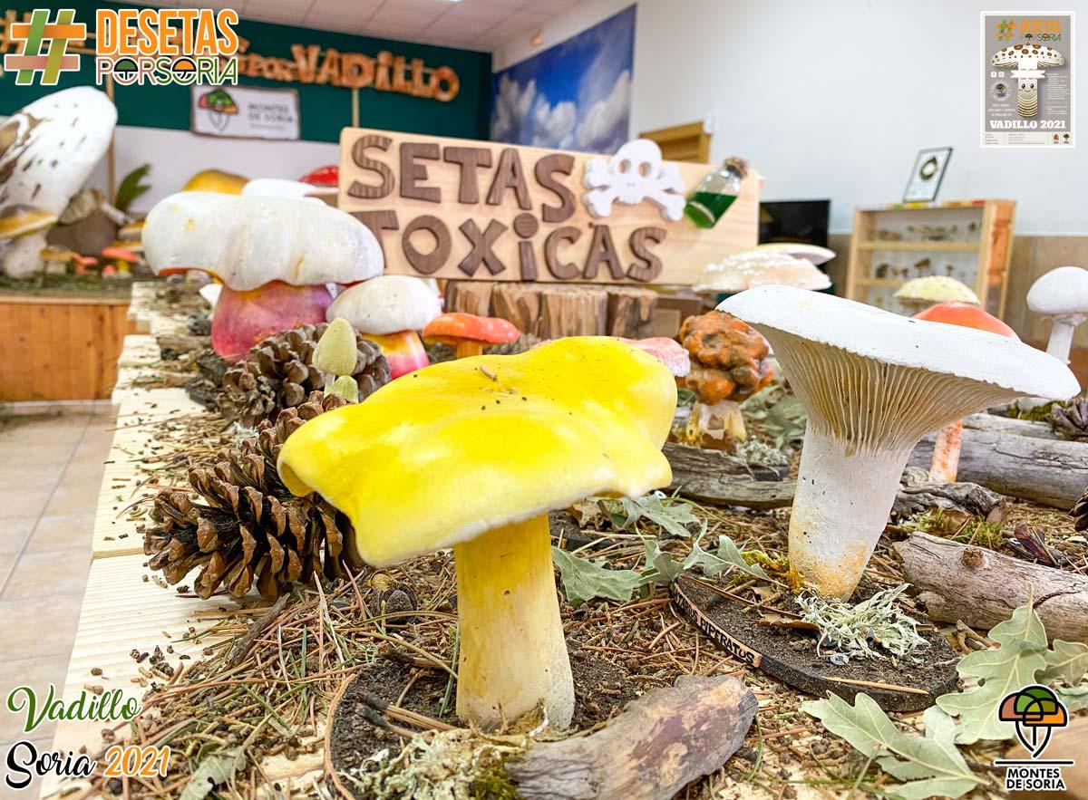 De setas por Vadillo exposición setas tóxicas
