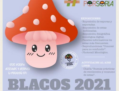 De setas por Blacos 2021