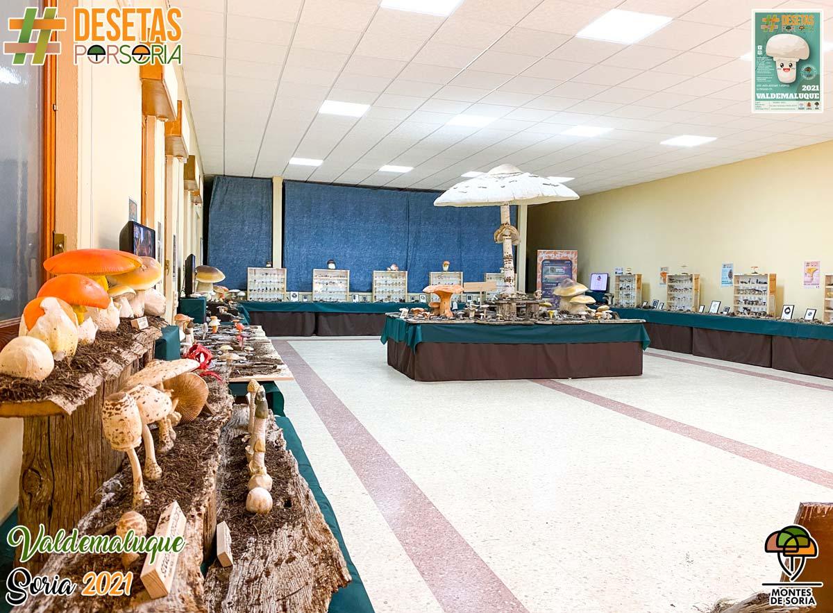 De setas por Soria - Valdemaluque 2021 vista salón