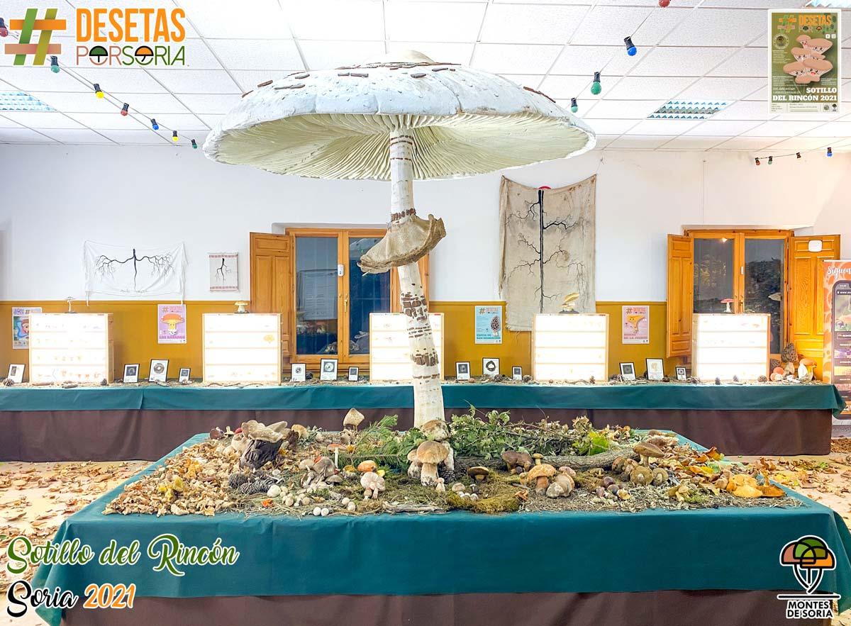 De setas por Soria - Sotillo del Rincón 2021 macrolepiota