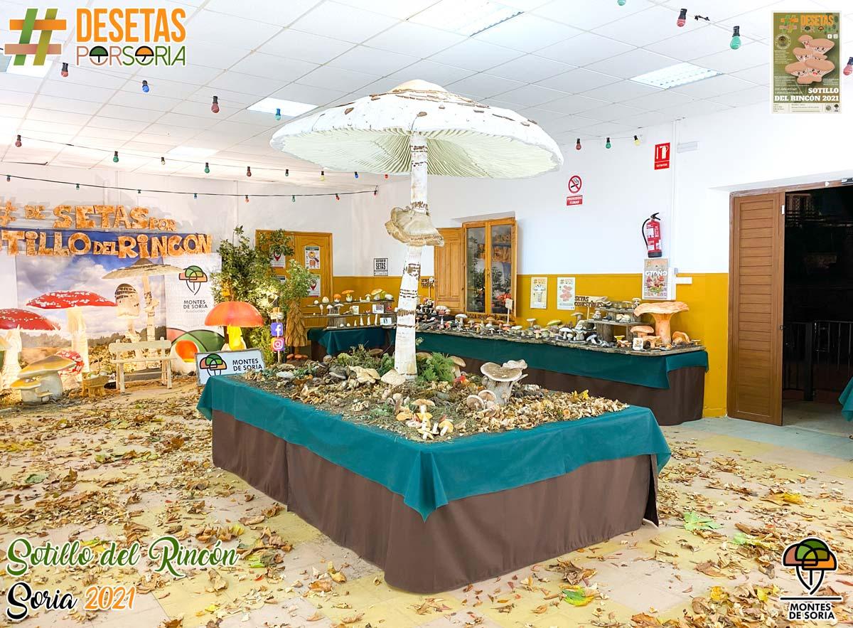 De setas por Soria - Sotillo del Rincón 2021 exposición micológica