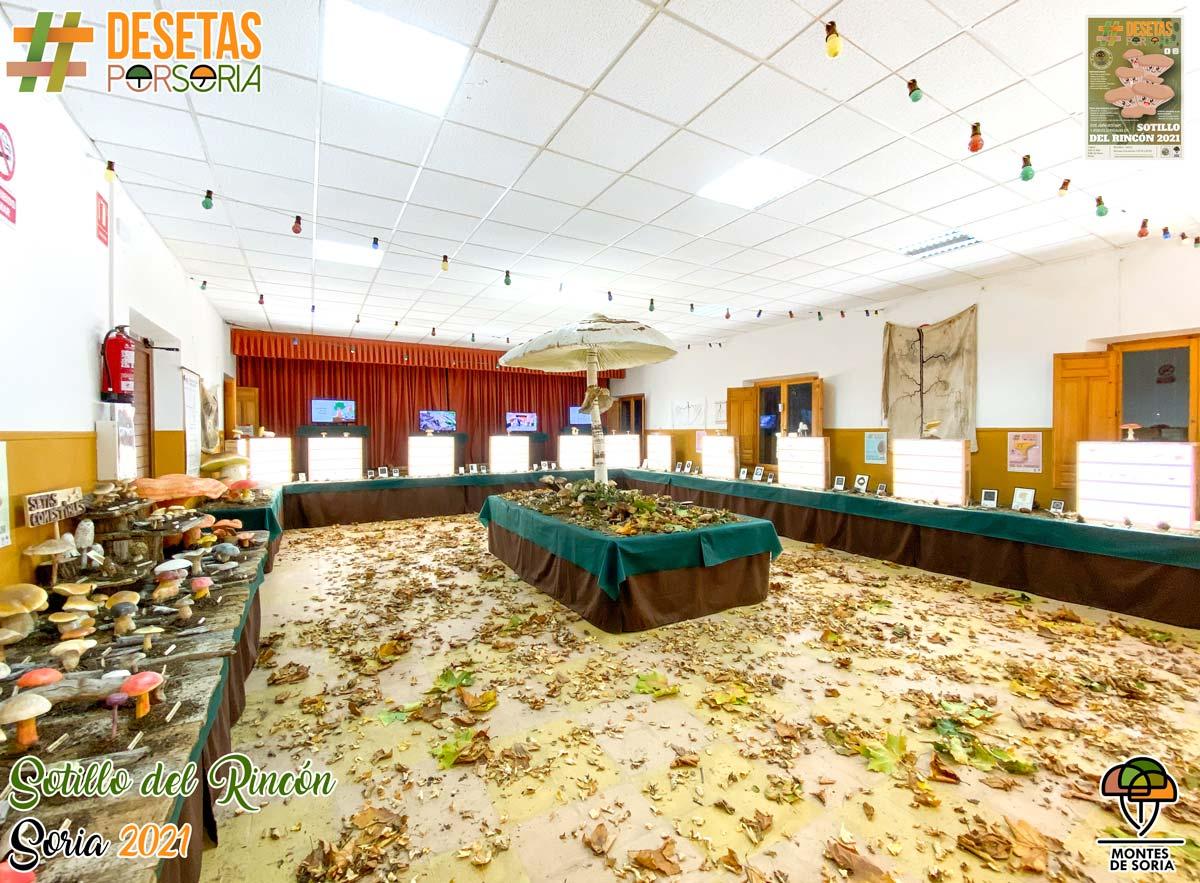 De setas por Soria - Sotillo del Rincón 2021 setas en fresco