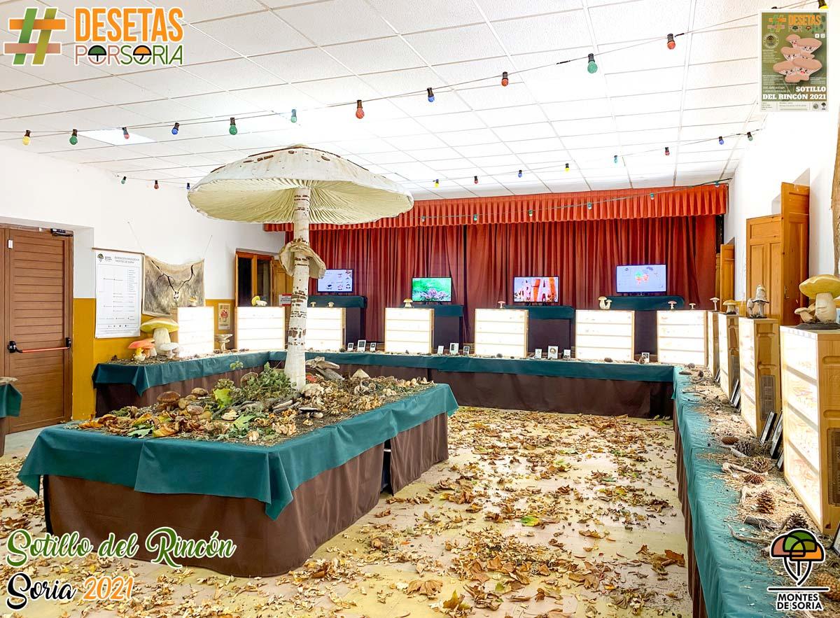 De setas por Soria - Sotillo del Rincón 2021 vitrinas setas liofilizadas