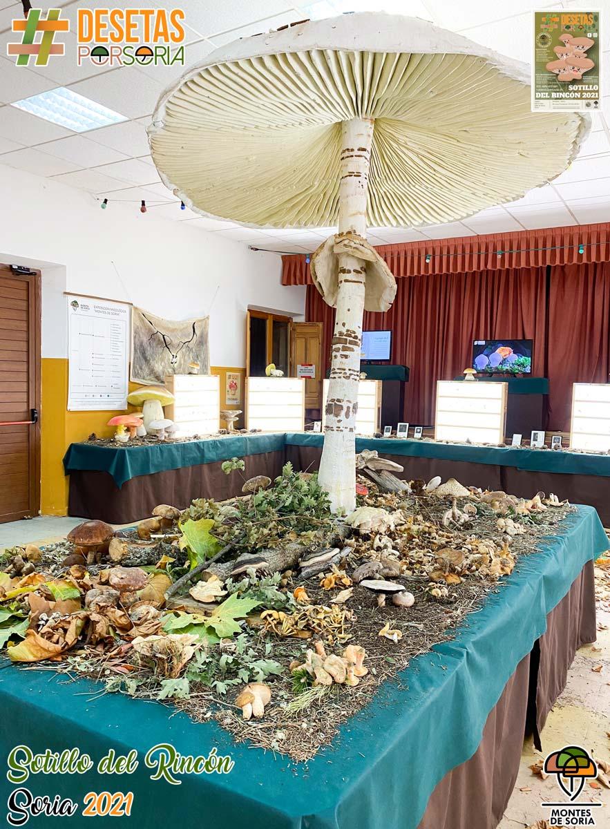 De setas por Soria - Sotillo del Rincón 2021 mesa de setas en fresco