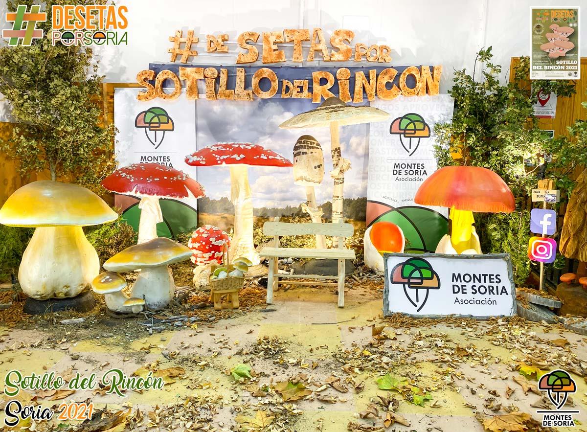 De setas por Soria - Sotillo del Rincón 2021 photocall micológico central