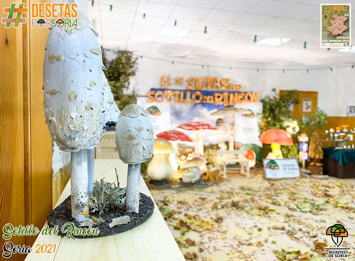 De setas por Soria - Sotillo del Rincón 2021 detalle