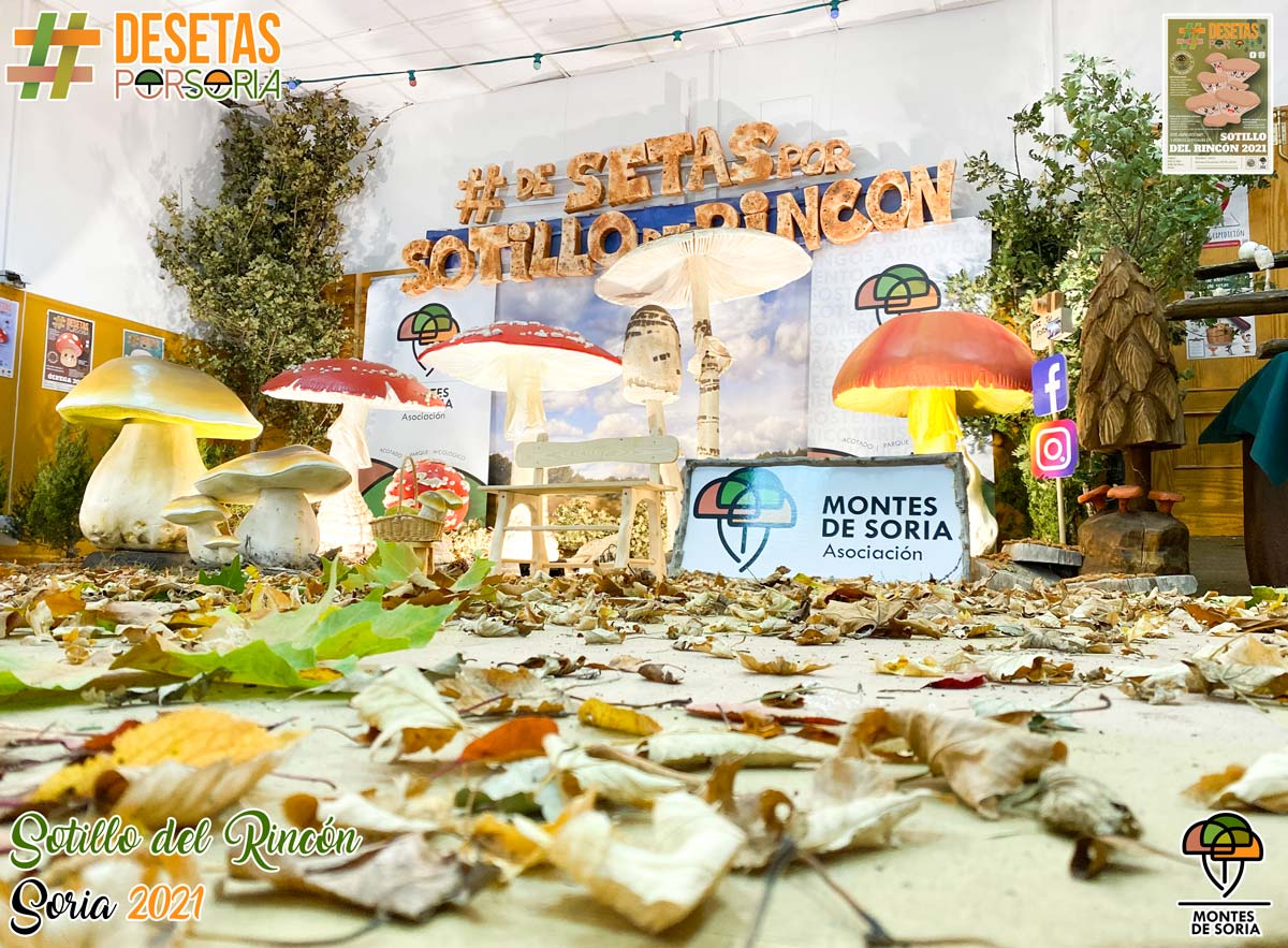 De setas por Soria - Sotillo del Rincón 2021 photocall suelo