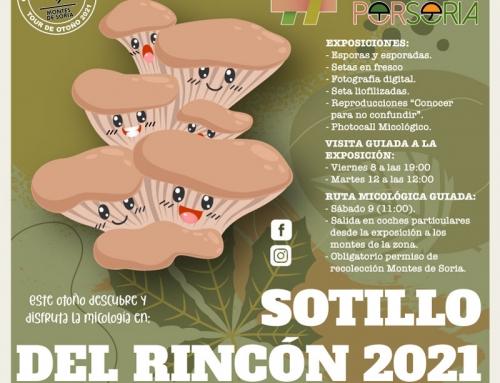 De setas por Soria – Sotillo del Rincón 2021