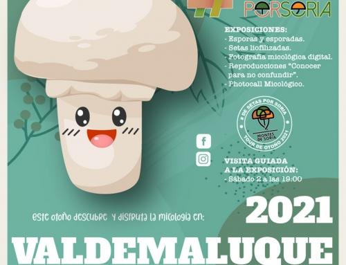 De setas por Soria – Valdemaluque 2021